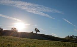 Sonne des frühen Morgens, die nahe bei Tal-Eiche auf Hügel in Weinanbaugebiet Paso Robles im Central Valley von Kalifornien USA s Lizenzfreies Stockbild