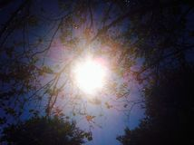 Sonne, die durch die Baumaste kommt Lizenzfreie Stockfotos