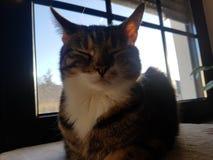 Katze. Sonne sun Cat ear Ohr bunt stock photos