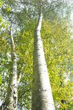 Sonnen-beleuchtete Bäume Stockbild