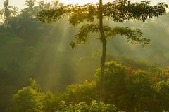 Sonnenaufgang über Bali-Dschungel Lizenzfreies Stockfoto