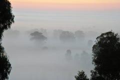 Sonnenaufgang über dem Baum in den Wolken Lizenzfreie Stockfotos