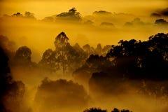 Sonnenaufgang über dem Baum in den Wolken Stockbilder