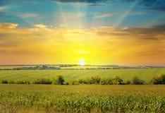 Sonnenaufgang über dem Maisfeld Stockfotos