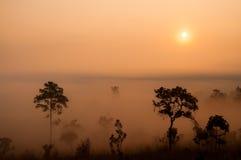 Sonnenaufgang über dem nebelhaften Wald. Stockfoto