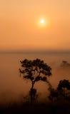 Sonnenaufgang über dem nebelhaften Wald. Stockfotos