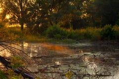 Sonnenaufgang über dem See mit Reflexion von bloßen Bäumen im Wasser Lizenzfreies Stockfoto