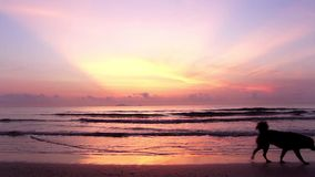Sonnenaufgang über dem tropischen Seeküstenstrand mit einem Hund, der auf den Strand geht stock footage