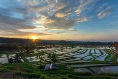 Sonnenaufgang über den Reisfeldern in Bali stockbilder