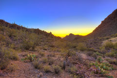 Sonnenaufgang über der sonoran Wüste Lizenzfreie Stockfotografie