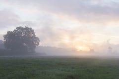 Sonnenaufgang über einem Feld Stockfotos