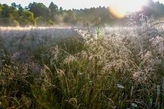 Sonnenaufgang über einem Feld mit Tau Lizenzfreie Stockfotografie