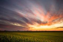Sonnenaufgang über einem Getreidefeld stockfoto