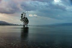Sonnenaufgang über einem See, Baum im See Lizenzfreies Stockfoto