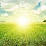Sonnenaufgang über einem Weizenfeld Stockbild
