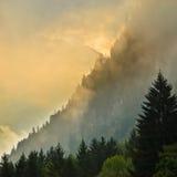 Sonnenaufgang über Gebirgsrücken mit Kiefern Lizenzfreies Stockfoto