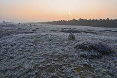 Sonnenaufgang über gefrorener Heide bei Veluwe Lizenzfreie Stockfotografie