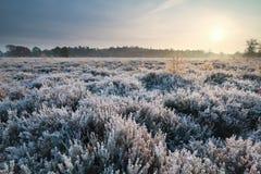 Sonnenaufgang über Heide während des eisigen Morgens lizenzfreies stockfoto