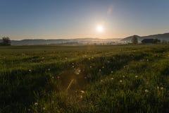 Sonnenaufgang über Löwenzahn und Landschafts-Feldern mit Tau-Tropfen herein stockbilder