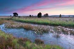 Sonnenaufgang über Sumpf mit Wollgras Lizenzfreies Stockfoto