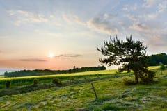 Sonnenaufgang über Wald Lizenzfreie Stockfotos