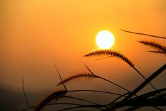 Sonnenaufgang über Wiesen Lizenzfreies Stockfoto