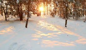 Sonnenaufgang. Stockfoto