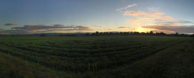 Sonnenaufgang am Ackerland Stockfotografie