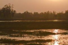 Sonnenaufgang auf Bardia-Dschungel, Nepal lizenzfreies stockbild