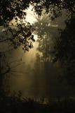 Sonnenaufgang auf dem Dschungel, Nationalpark Bardia, Nepal stockbilder