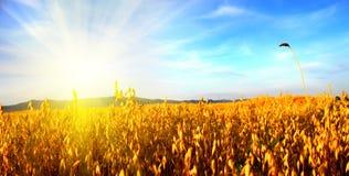 Sonnenaufgang auf dem Gebiet Lizenzfreie Stockbilder