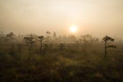 Sonnenaufgang auf dem Kemeri-Sumpf Stockfotografie