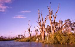 Sonnenaufgang auf dem Murray-Fluss Stockbild