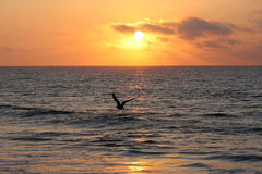 Sonnenaufgang auf dem Ozean Lizenzfreies Stockbild