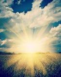 Sonnenaufgang auf dem sumerly Weizenfeld instagram Zauntritt lizenzfreies stockfoto