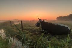 Sonnenaufgang auf den Gebieten Stockfotografie