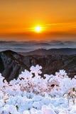 Sonnenaufgang auf Deogyusan-Bergen bedeckt mit Schnee im Winter Stockfoto