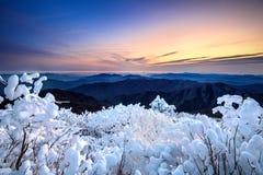 Sonnenaufgang auf Deogyusan-Bergen bedeckt mit Schnee im Winter, Korea Lizenzfreie Stockfotos