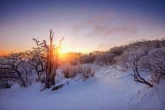 Sonnenaufgang auf Deogyusan-Bergen bedeckt mit Schnee im Winter, Korea Lizenzfreies Stockfoto