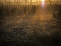 Sonnenaufgang auf einem Gebiet Stockbild
