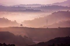 Sonnenaufgang auf einem Kiefernhügel Stockfotografie