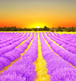 Sonnenaufgang auf einem Lavendelgebiet Stockfoto