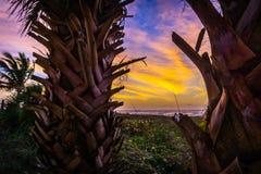Sonnenaufgang auf einem Strand in einem karibischen Paradies mit Palmen Stockbilder