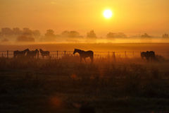Sonnenaufgang auf einer Pferdekoppel Stockfoto