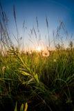 Sonnenaufgang auf einer Wiese Lizenzfreie Stockfotos