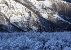 Sonnenaufgang auf gefrorenem Holz auf Berg Catria, Apennines, Marken, Italien stockfotografie
