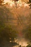 Sonnenaufgang auf Holzbrücke in der Mitte des Dschungels Stockfotografie