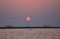 Sonnenaufgang auf Küste mit Fliegenvögeln Stockfotos