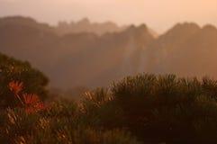 Sonnenaufgang auf mt. Huangshan Stockbilder