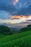 Sonnenaufgang auf Plantage des grünen Tees mit dem Fujisan Stockfotos